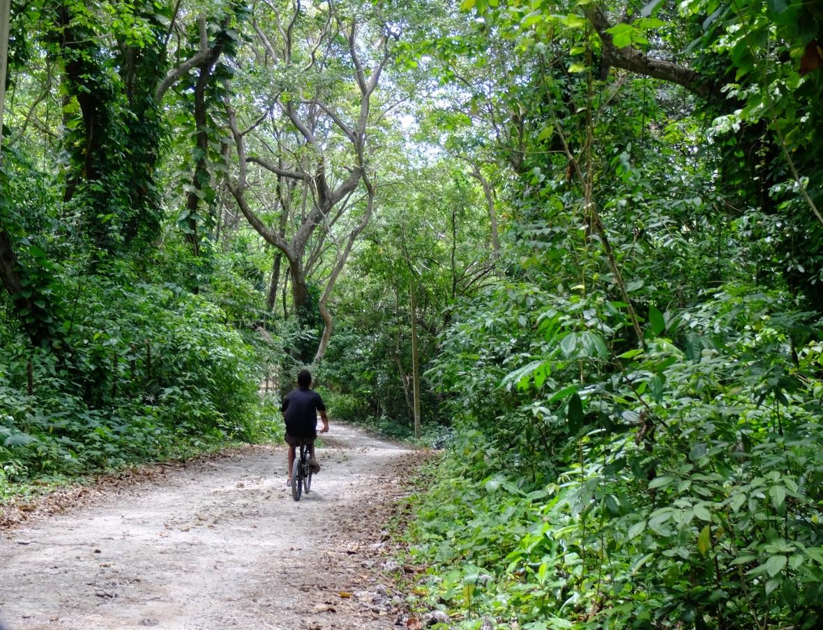 Bike Through the Jungle